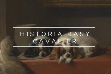 Historia Cavaliera