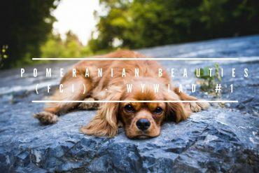 Pomeranian Beauties (FCI) – wywiad #1