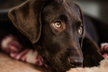 Rodowód dla psa – czy jest konieczny i jak go wyrobić?